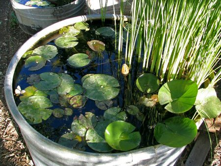 Creative container gardens in god 39 s economy for Container pond