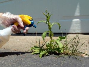 Naturally Frugal Weed Killer