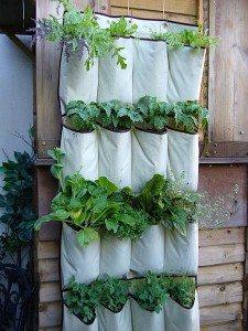 Creative Container Gardens