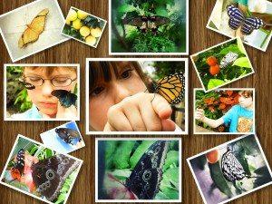 PhotoWalk Friday: Cincinnati Butterfly Show