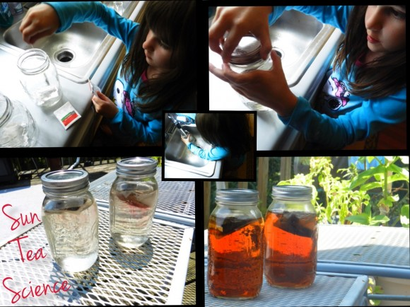 Sun Tea Science