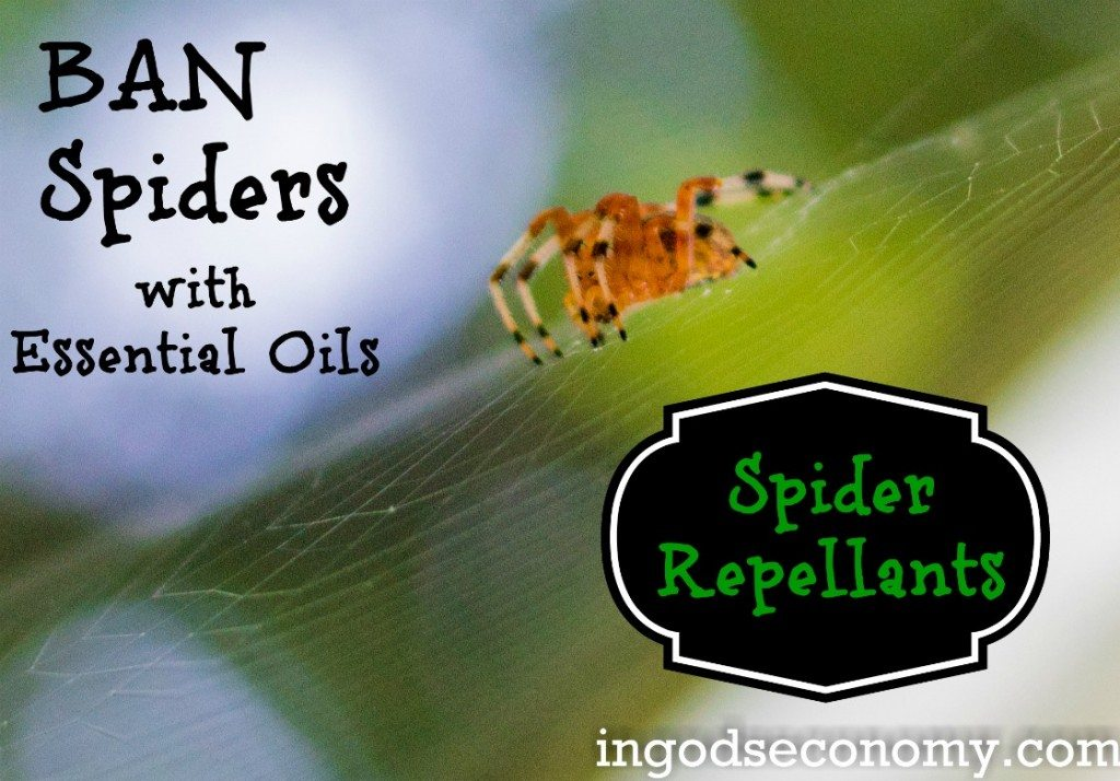 Put down the lighter and step away from the chemicals! Use essential oils to quickly and effectively BAN spiders from your home!