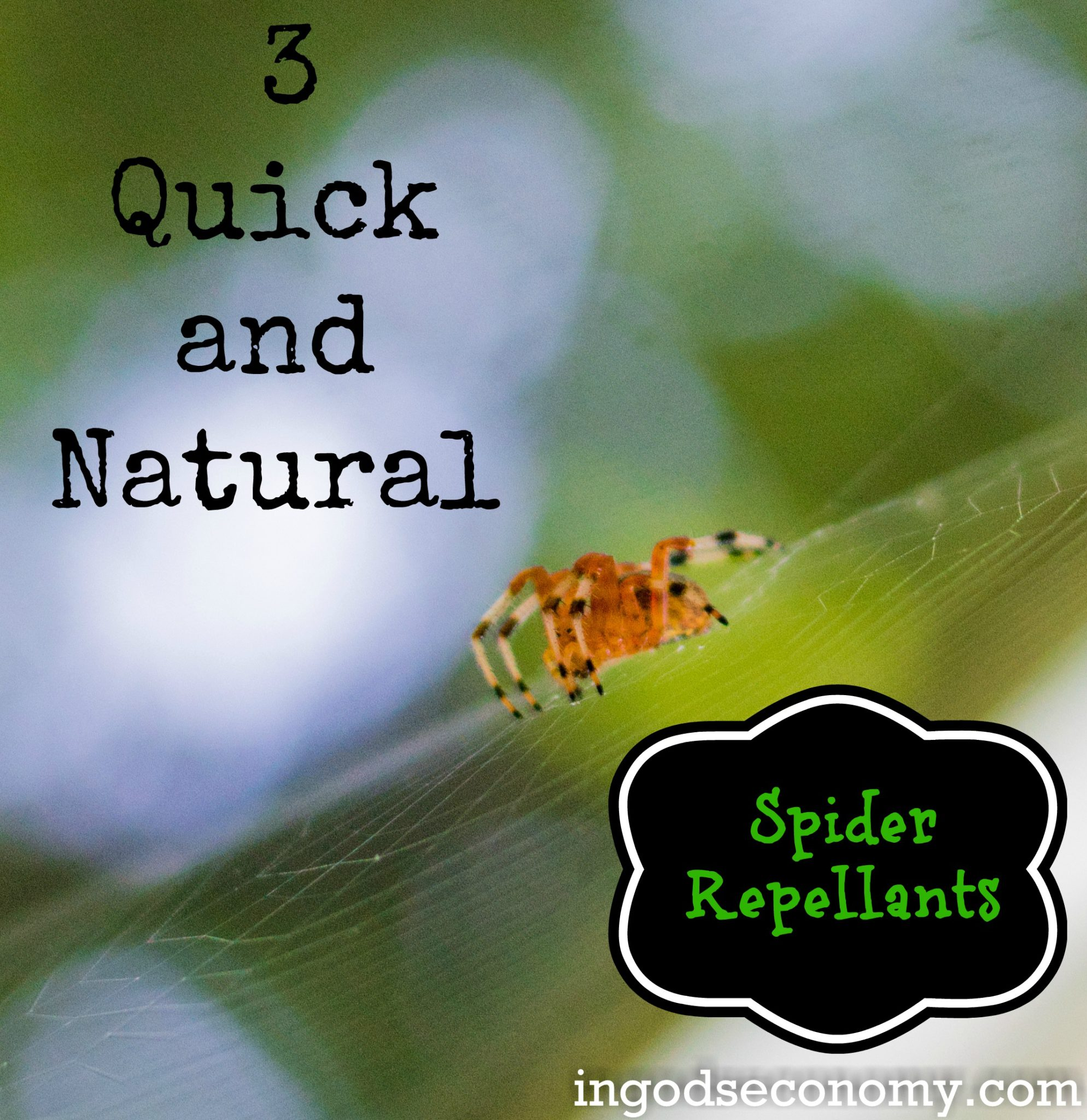 Homemade Natural Spider Repellant